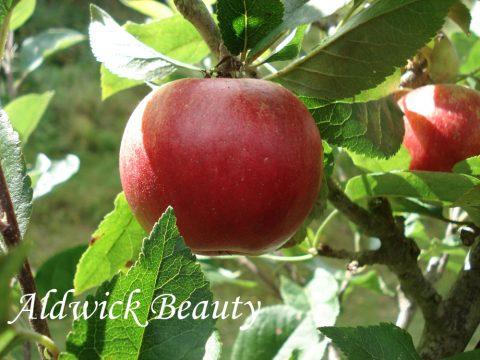 Aldwick Beauty