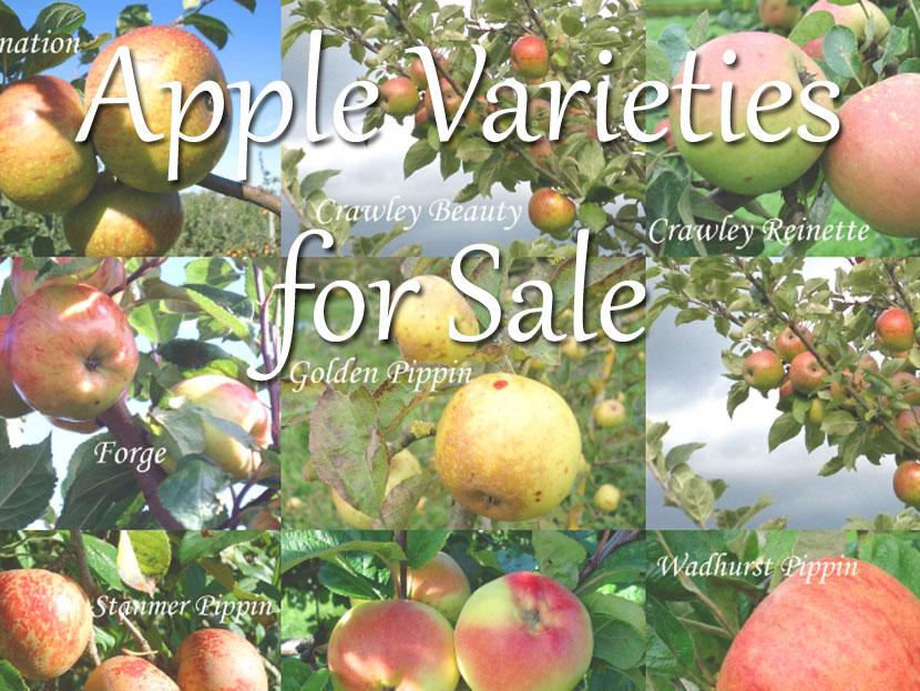 Apple varieties for sale