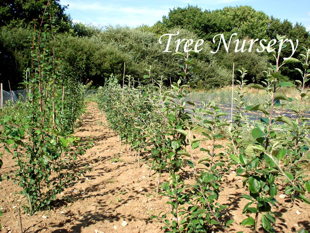 Sussex apple tree nursery